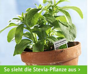 stevia zucker ersatz ohne kalorien aber mit extra viel. Black Bedroom Furniture Sets. Home Design Ideas
